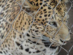 Tamao_Zoo, Cambodia