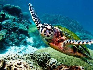 Koh Kong Scuba Diving
