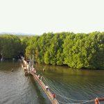 Mangrove Forest Koh Kong