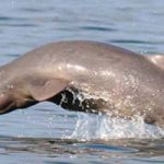 Irrawaddy Dolphins, Kratie Attractions