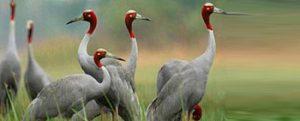 Sam Veasna Center For Wildlife Conservation (SVC)