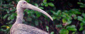 Thmatboey Community-Based Ecotourism Site