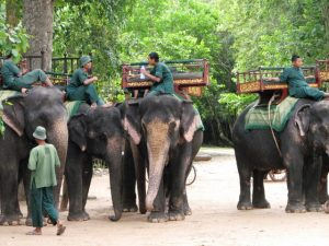 Angkor Elephant Ride