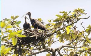 Lumphat Wildlife Sanctuary